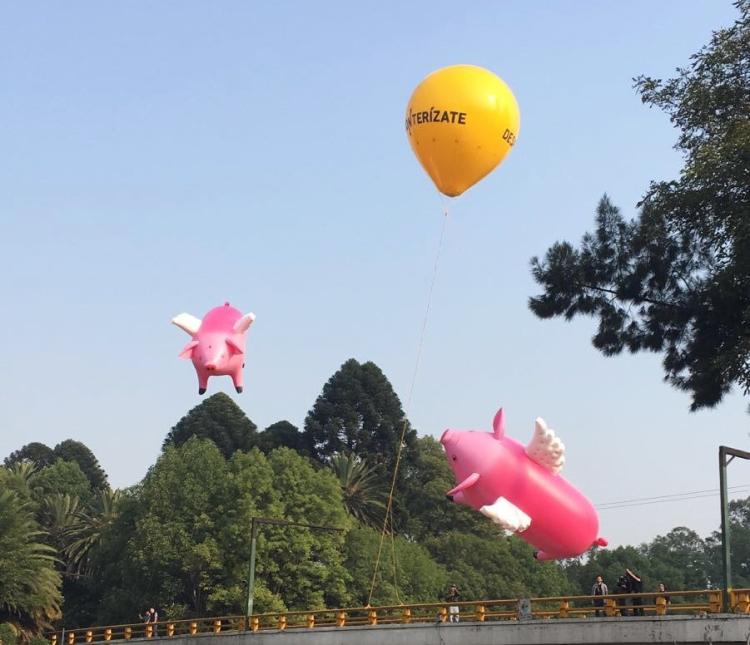 Cerdos Vuelen/Sitio Oficial